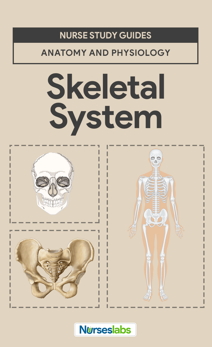 Skeletal System Anatomy and Physiology | Pinterest | Medical ...