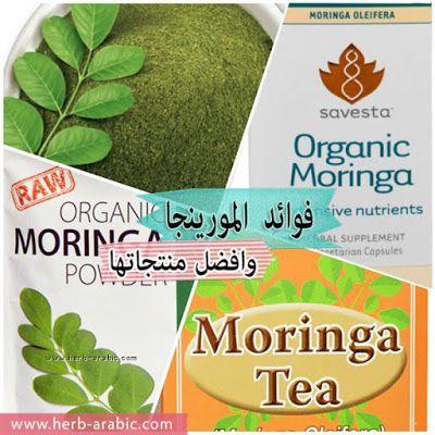 فوائد المورينجا العضوية وانواعها في اي هيرب Moringa Benefits Moringa Moringa Oleifera