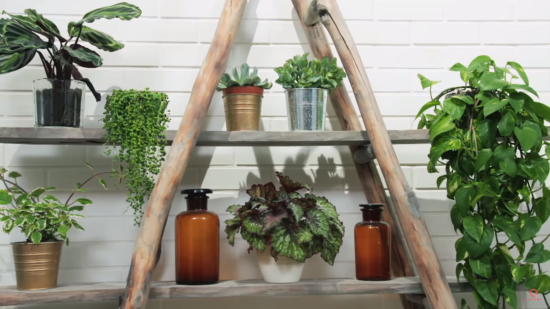 Houseplants Have Been Climbing Up The Home Decor Trend Ladder