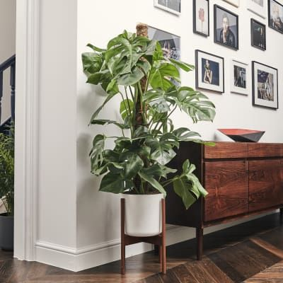 Indoor House Plants Online Patch