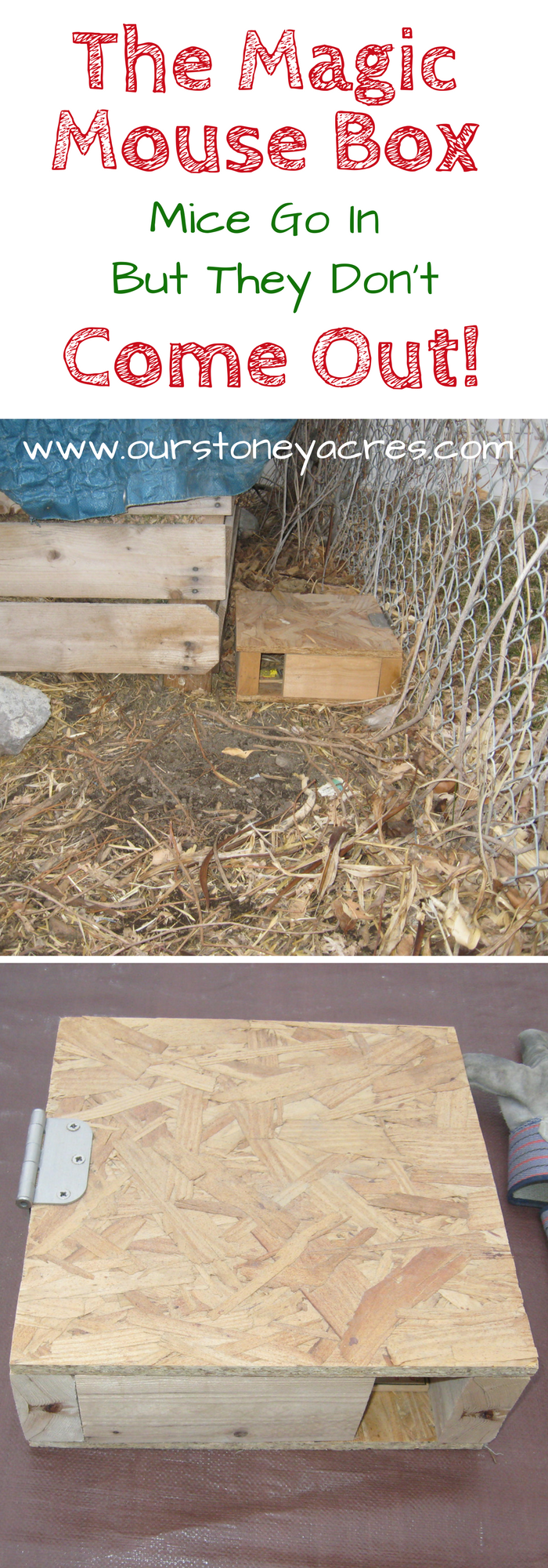 The Magical Mouse Box - Our Stoney Acres