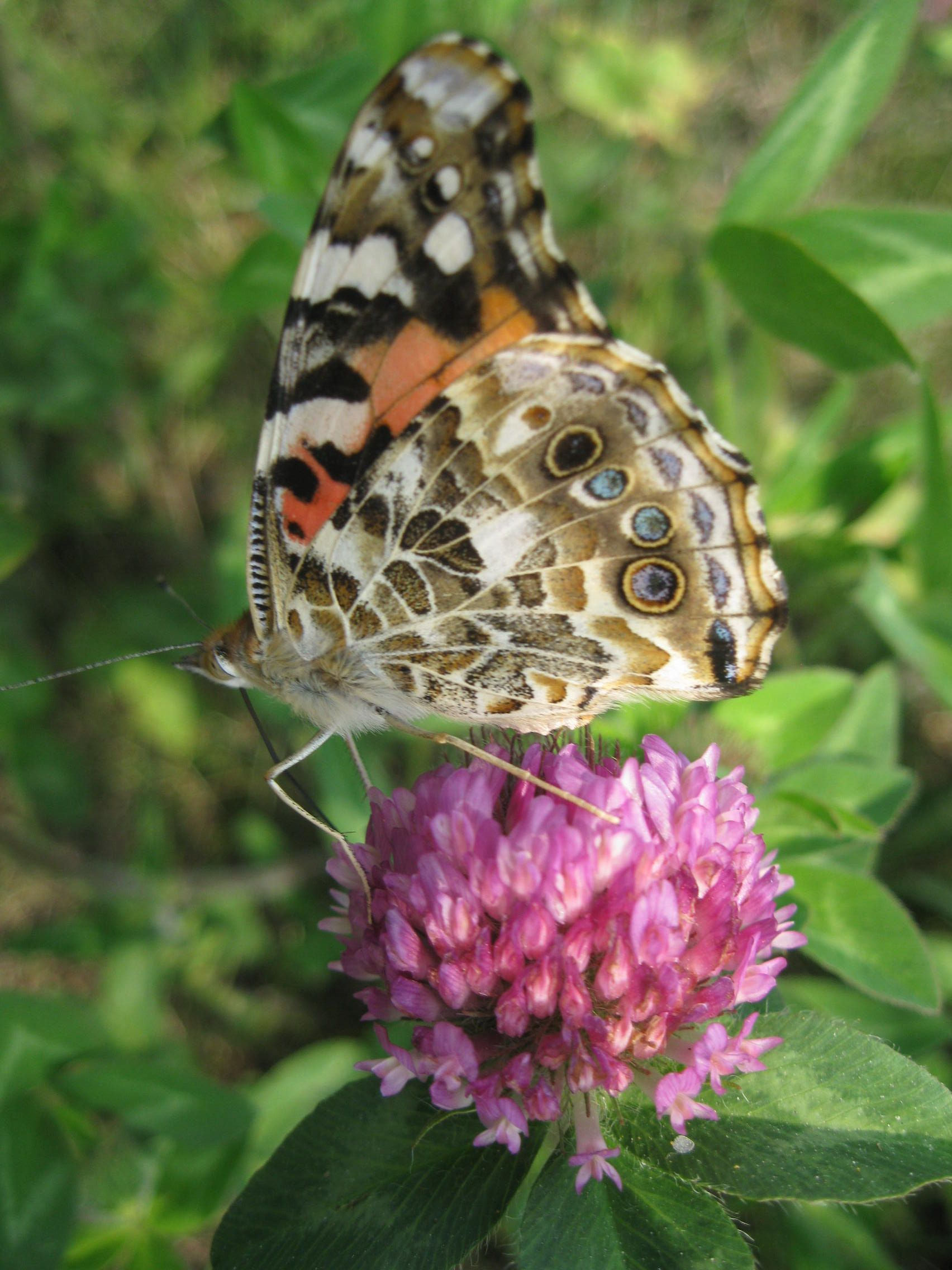 Butterfly in the yard | Butterfly, My favorite things, Insects