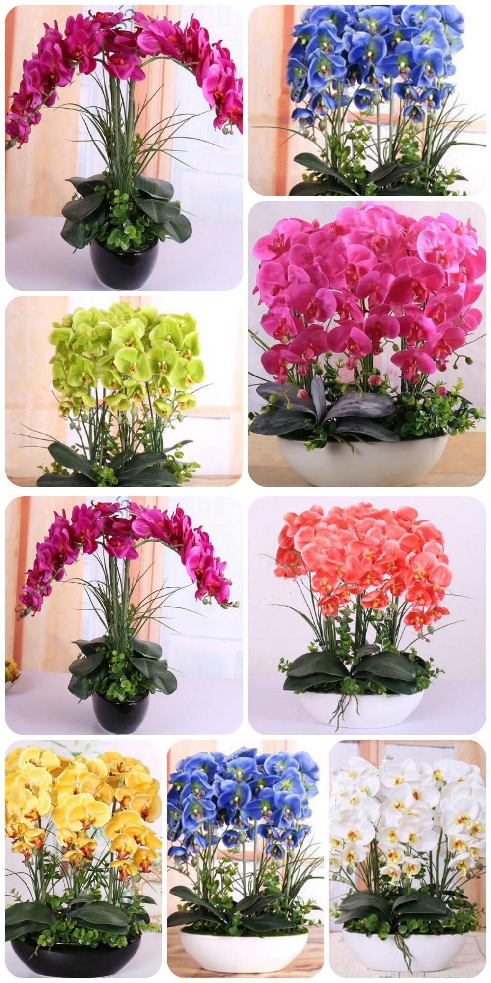 Orchid seeds high simulation flower phalaenopsis orchid plants