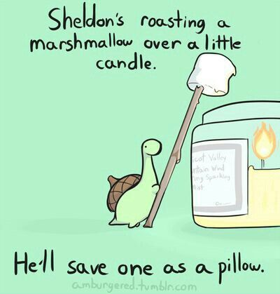 Sheldon's roasting a marshmallow over a little candle, he'll save one as a pillo...