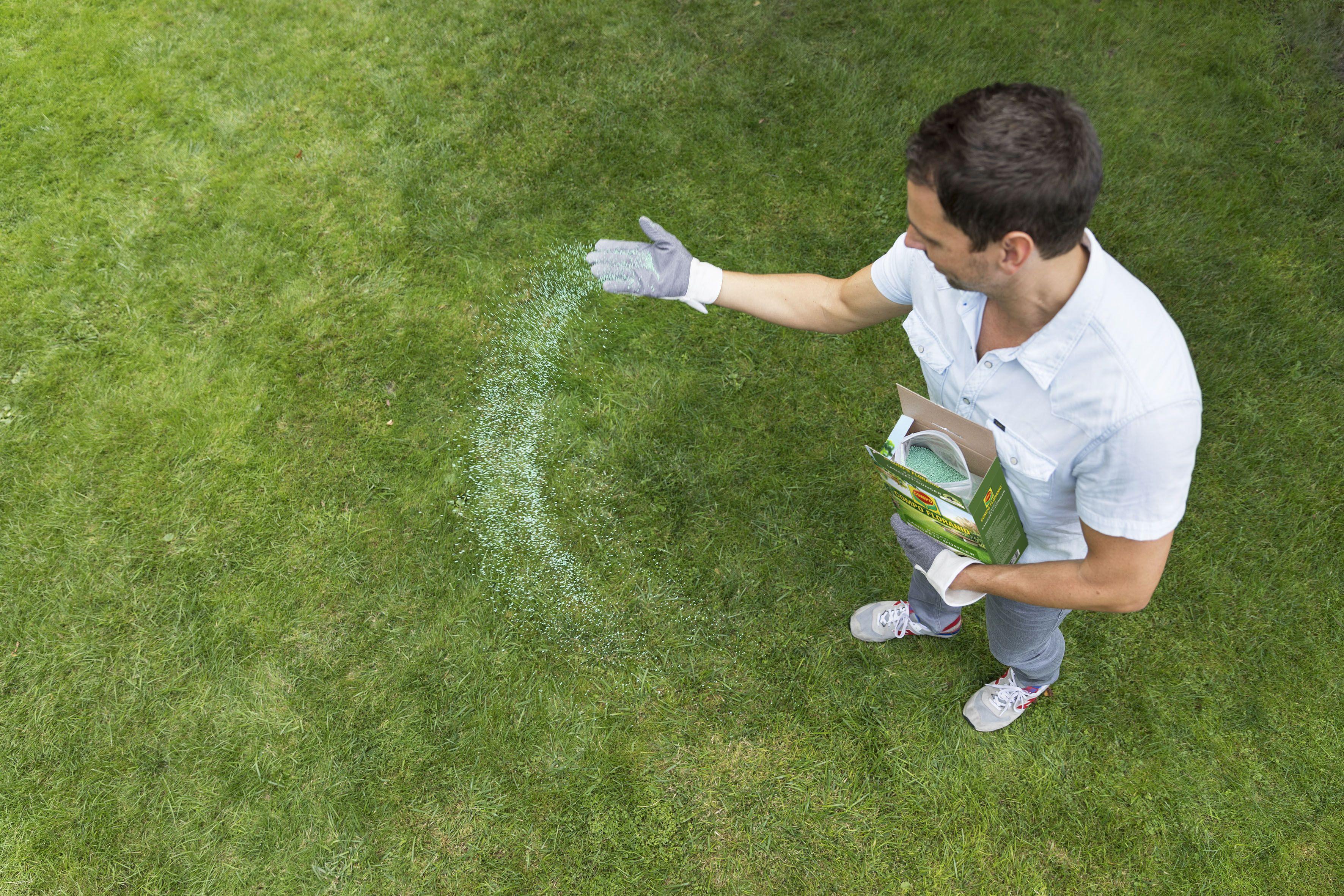 Moos Im Rasen Bekampfen Das Haus Rasenpflege Rasen Gruner Rasen