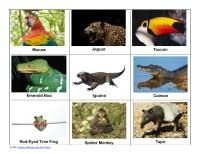 free rainforest animal nomenclature cards nursery rhymes fun times designed to match up with the safari rainforest toob and the umbrella by jan