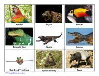 Amazon Rainforest Nomenclature Cards Free Printable Rainforest