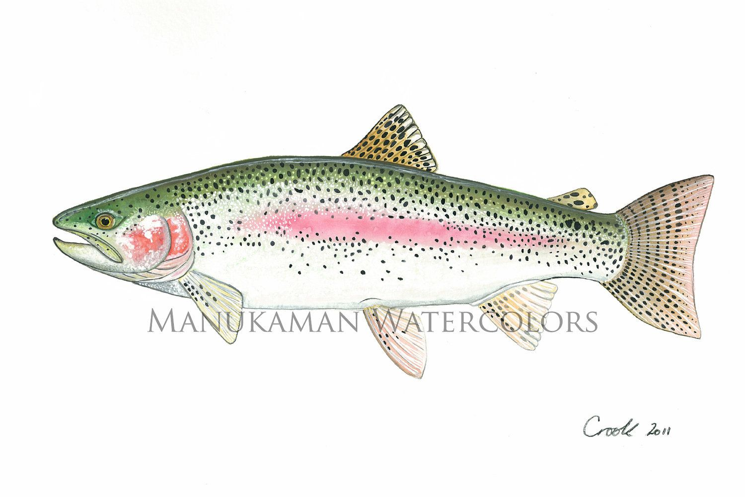 Rainbow Trout Pic to Color 2 Trout Coloring Page with ... | Verre ...
