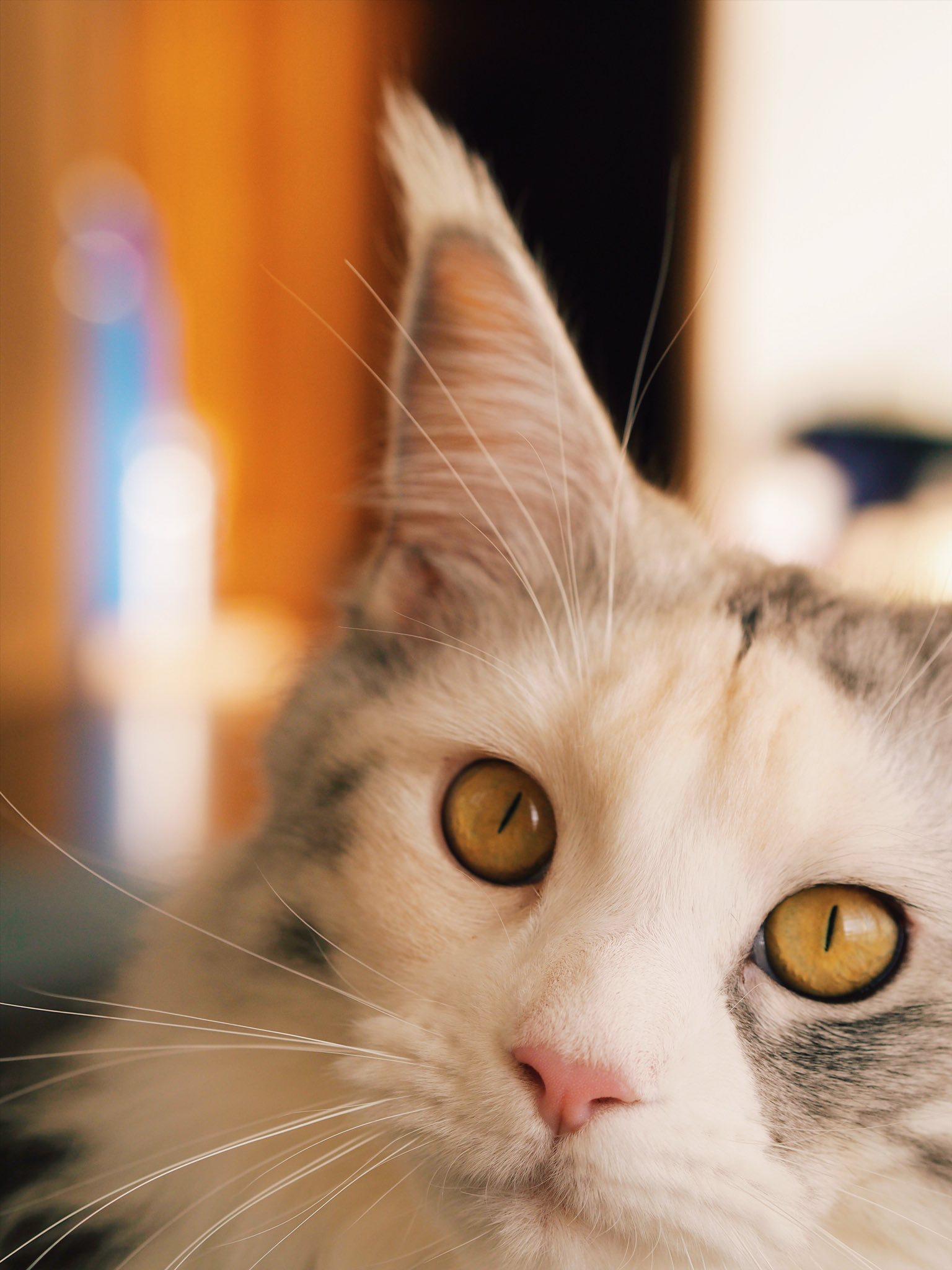「Beautiful cats」おしゃれまとめの人気アイデア|Pinterest|Susanne Trabucco