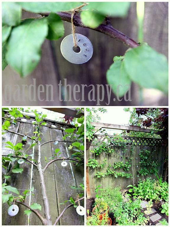 Make Your Own Metal-Stamped Plant Tags - shown here on espalier apple tree