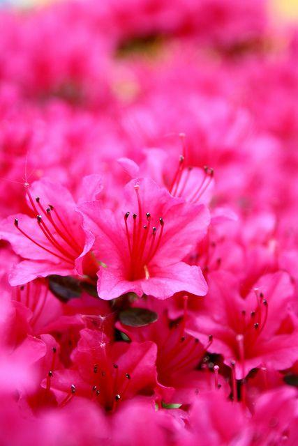 Pink by Rhi B, via Flickr