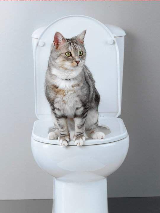Apprendre à un chat à aller aux toilettes caillou Pinterest - mauvaise odeur toilettes maison