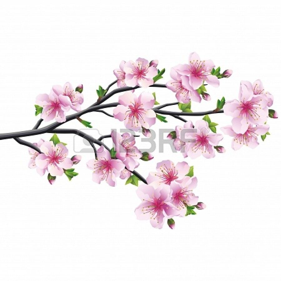 Cherry Blossom Pink Violet Anese Tree Sakura Isolated On White Background Ilration Stock Photo 25308813
