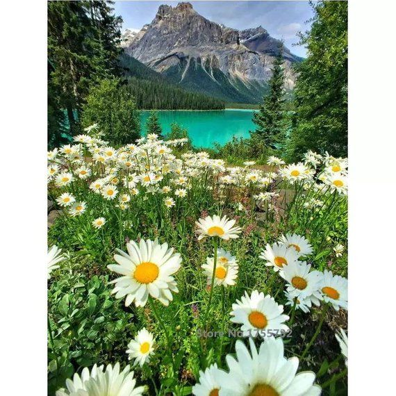 US Seller. Paint by Number Kit – Mountain Flowers by the Lake, Daisies, Landscape. DIY.  Fast Shippi