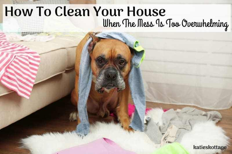 How To Clean Your House When The Mess Is Overwhelming Dog