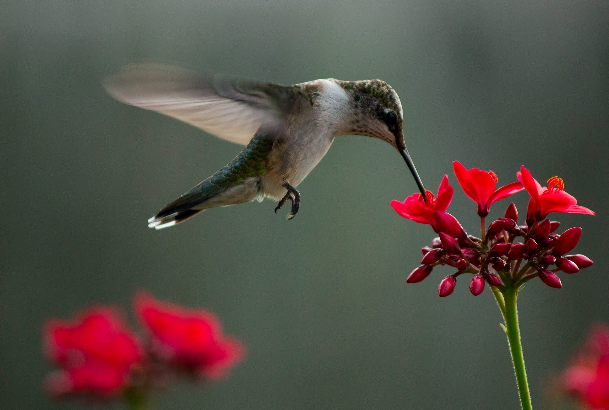 Southern migration of the hummingbirds last Fall. Had