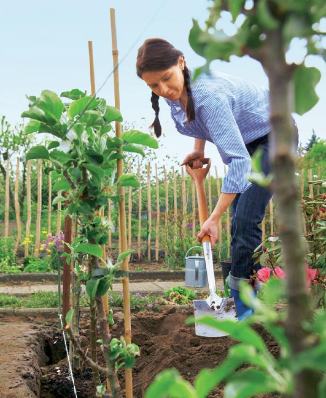 Säulenobst Pflanzen, Sichtschutz pflanzen und Biogarten