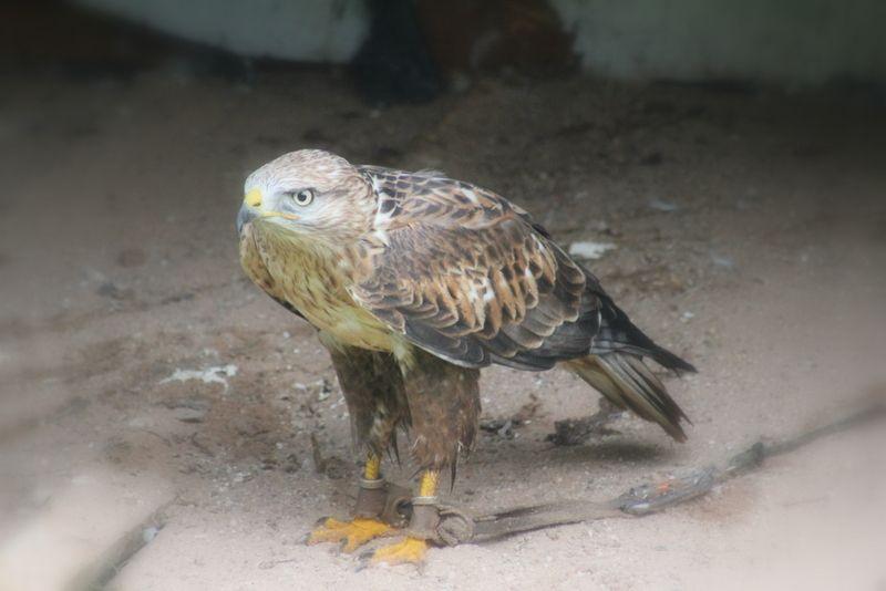 birdyyy <3