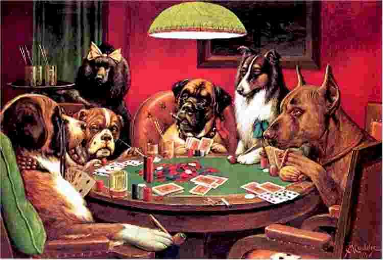 Types of poker players animals vegas hd slots