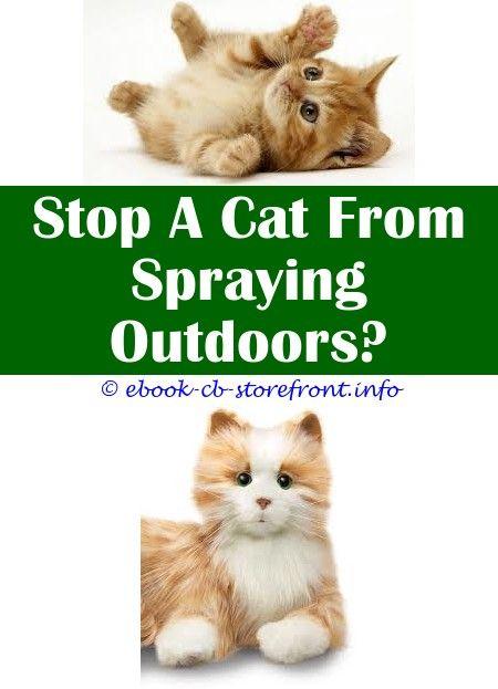 3 Determined Clever Hacks What Gender Cat Sprays Hormone Spray