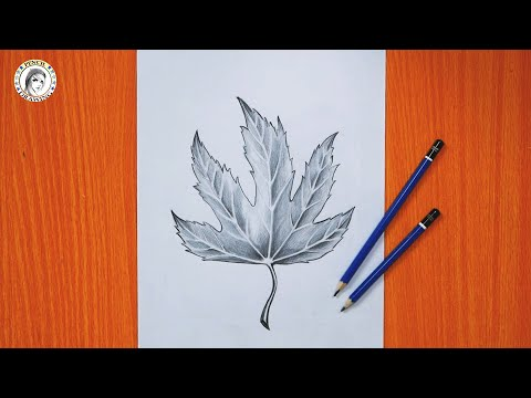 Pin By Hd Drawing Academy On Drawing For Beginners Drawing For Beginners Drawings
