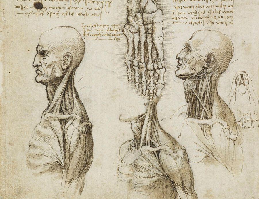 Leonardo Da Vinci Anatomy Sketches - Bing Images | Leonardo Da Vinci ...