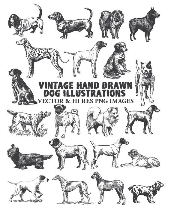 Hand Drawn Dog Clipart Pet Dog Vintage Clipart Clip Art Png