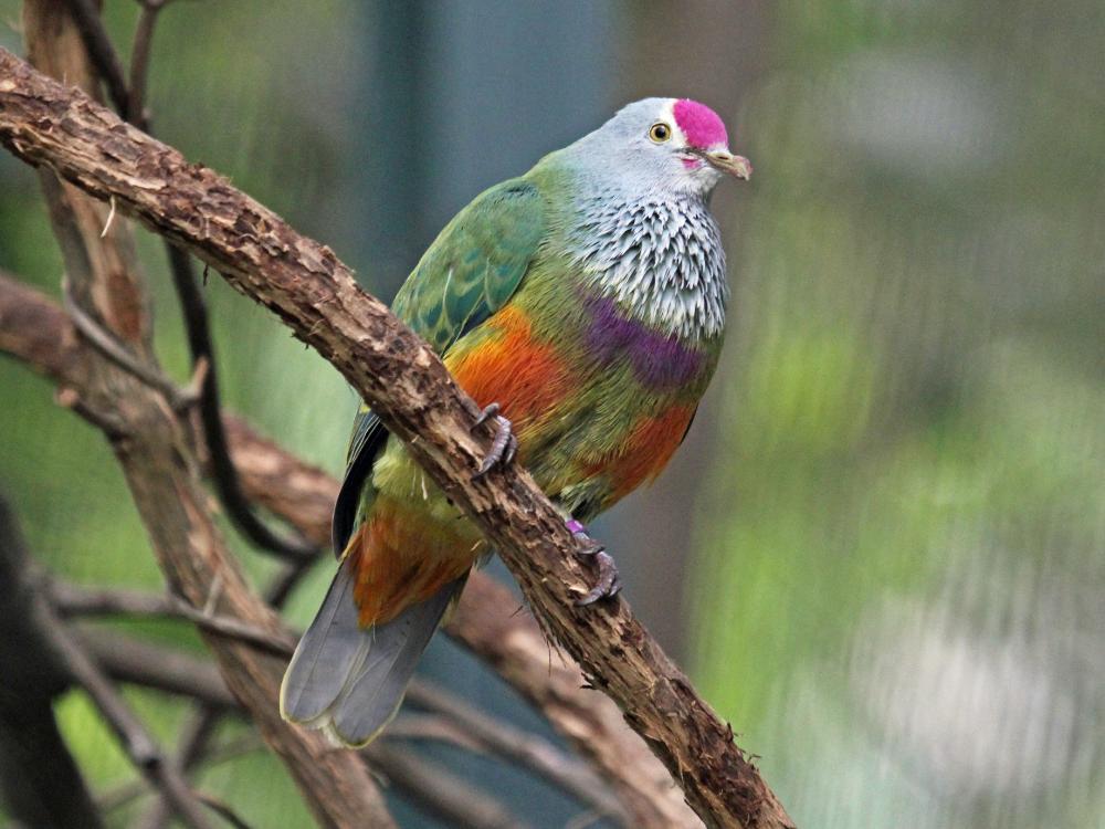beautiful birds Google Search Birds, Mariana