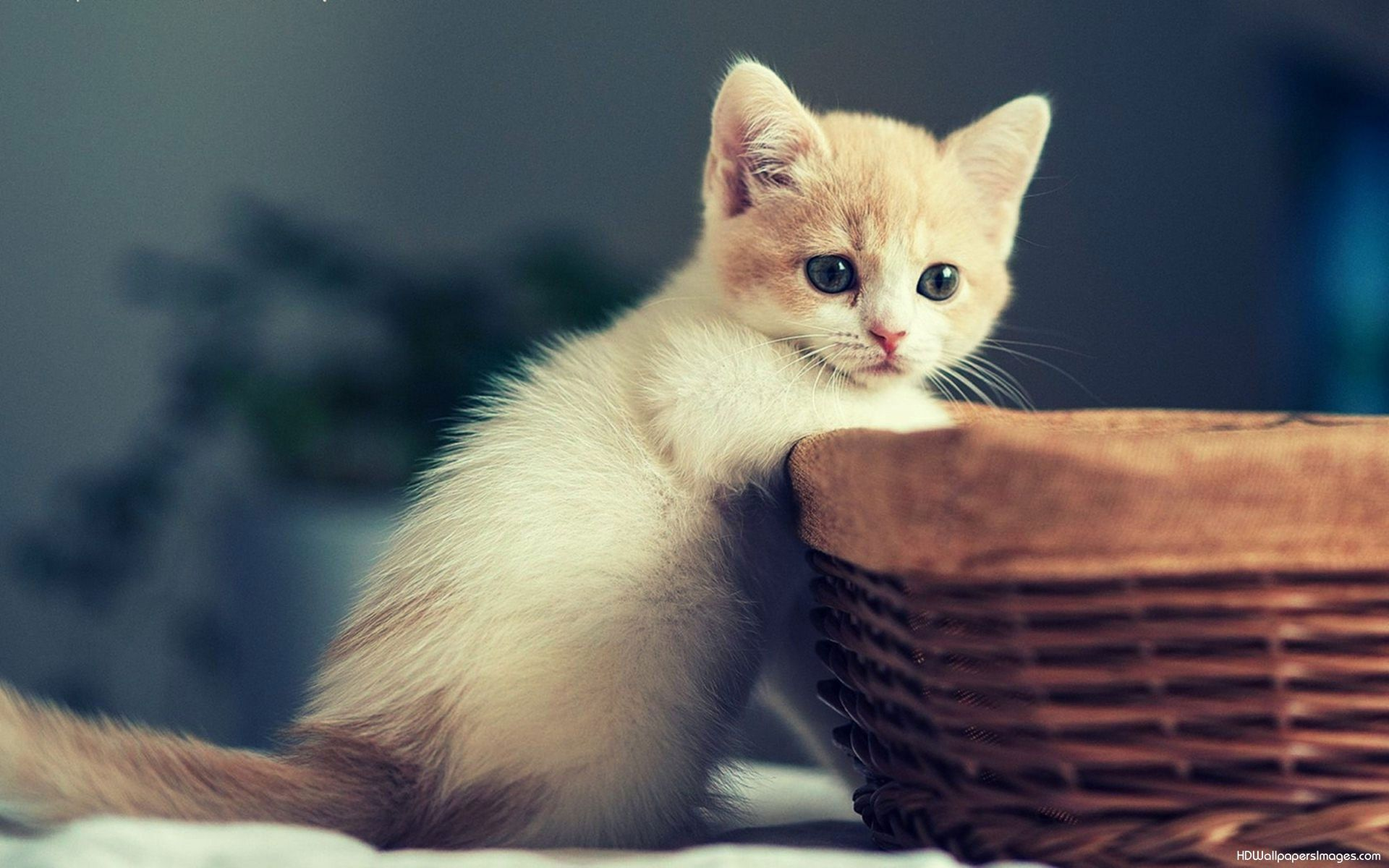 Kitten And Puppy Wallpapers Group 1200×810 Funny Kitten