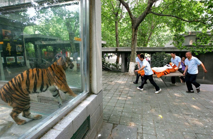 Escape drill from a Chinese zoo.