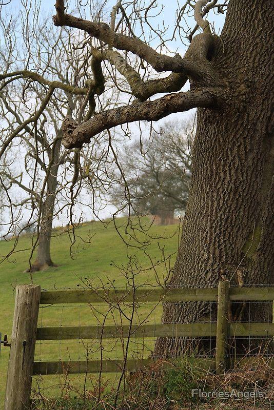 Truncated ~ Portrait Tree Image, Tremeirchion, North Wales UK