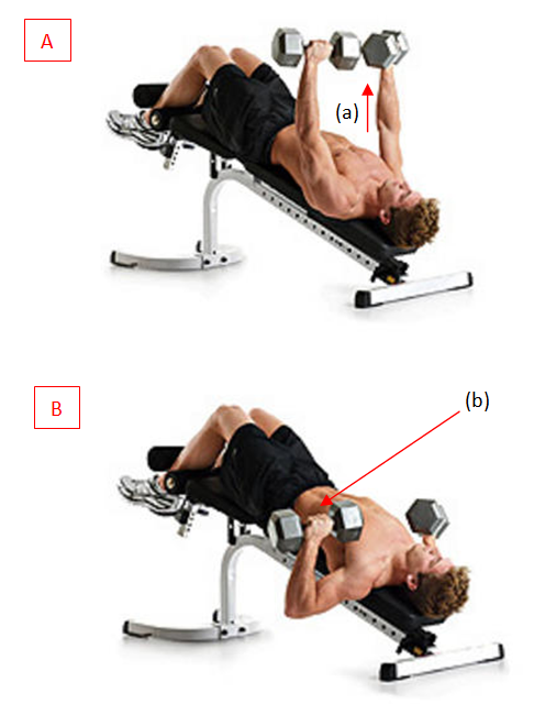 No Baine No Gain Exercise Of The Day Decline Bench Press Bench Workout Bench Press Exercise