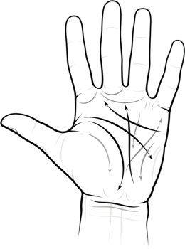 Guia da leitura da palma