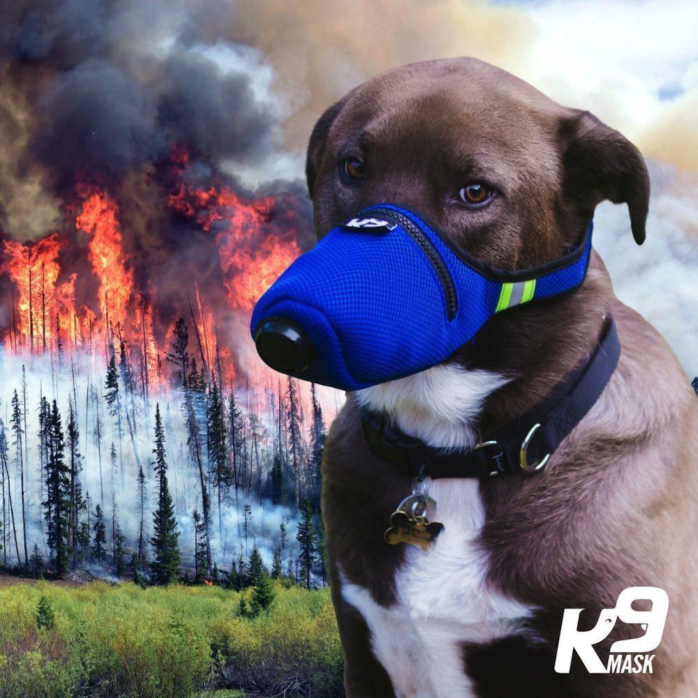 Pin On P Dog K9 Masks