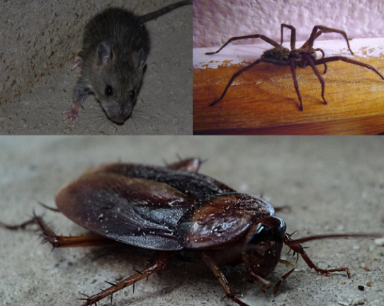 Elite Maintenance Service Provides An Extensive Range Of Pest Control Services In Gold Coast It Has Specialist In Three Termite Control Wood Termites Termites