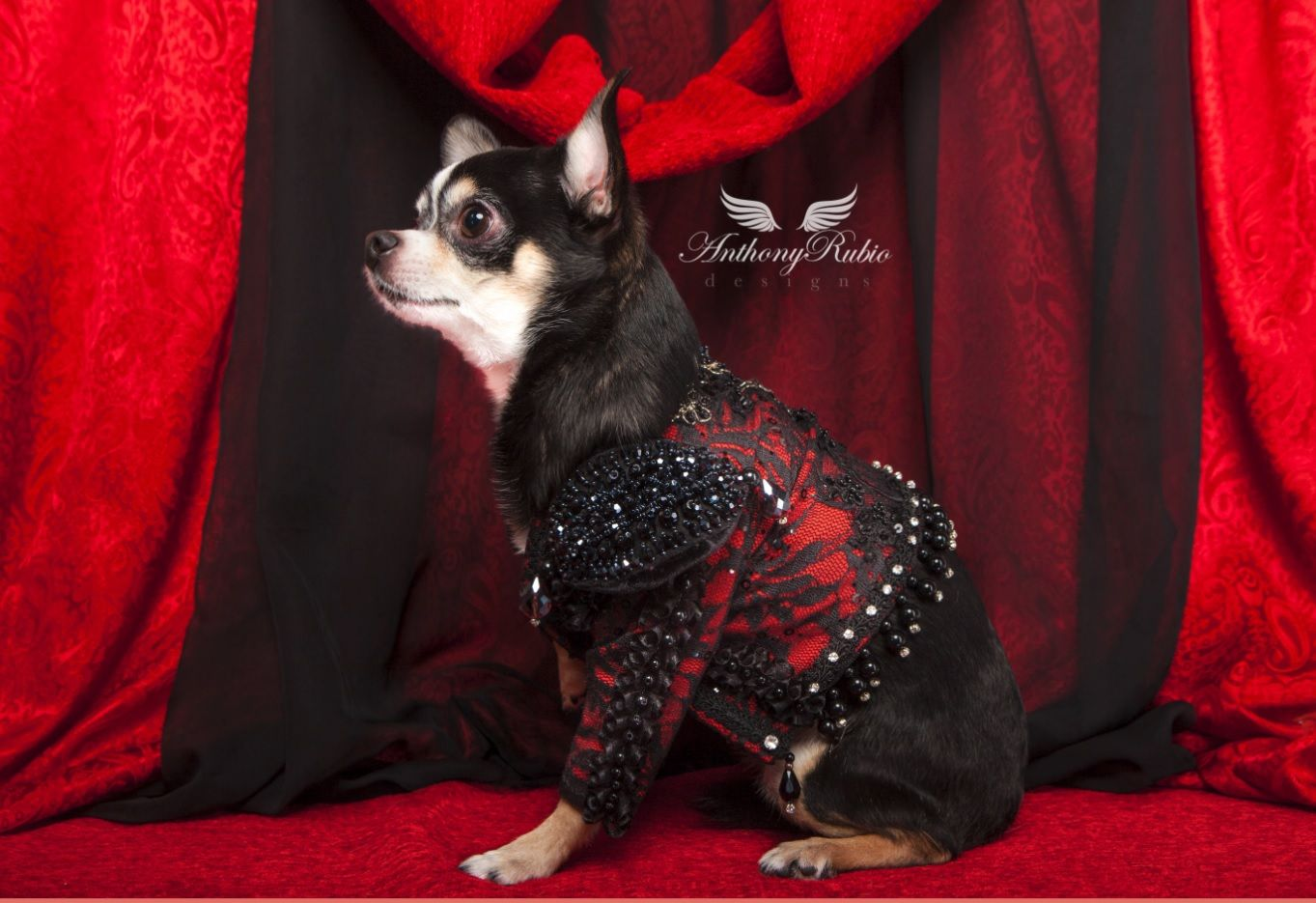 Pin By Margariita Esparraga On Yago In 2020 Animal Fashion Pet Fashion Chihuahua