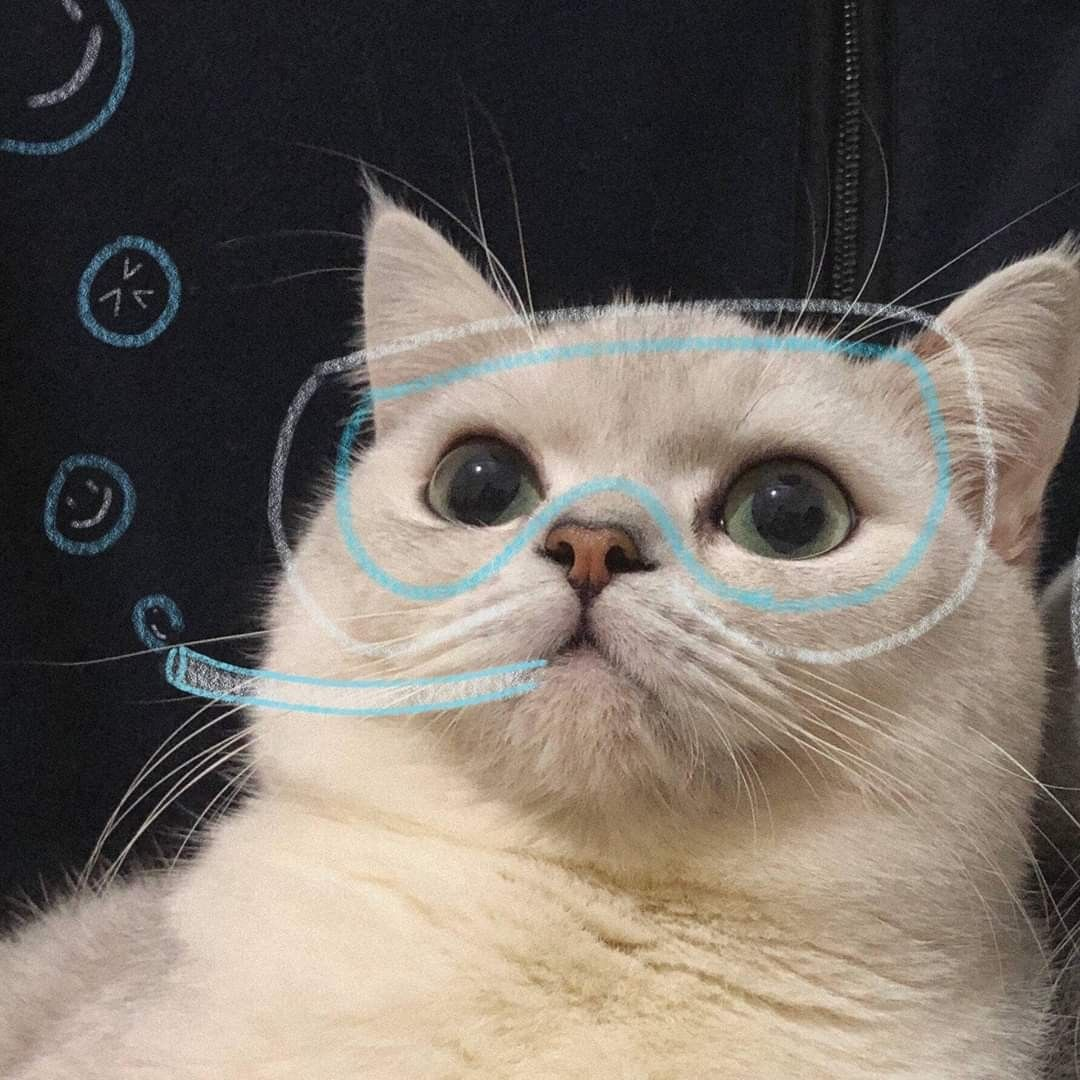 cre weibo Mèo đẹp, Ảnh mèo hài hước, Động vật