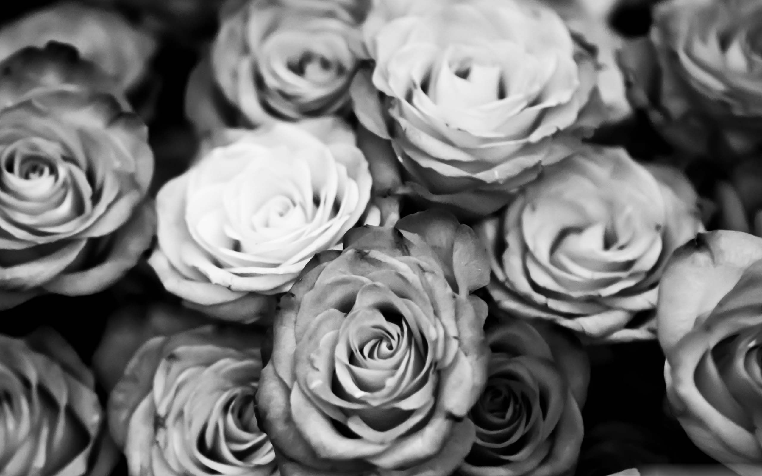Black White With Images Facebook Cover Photos Flowers