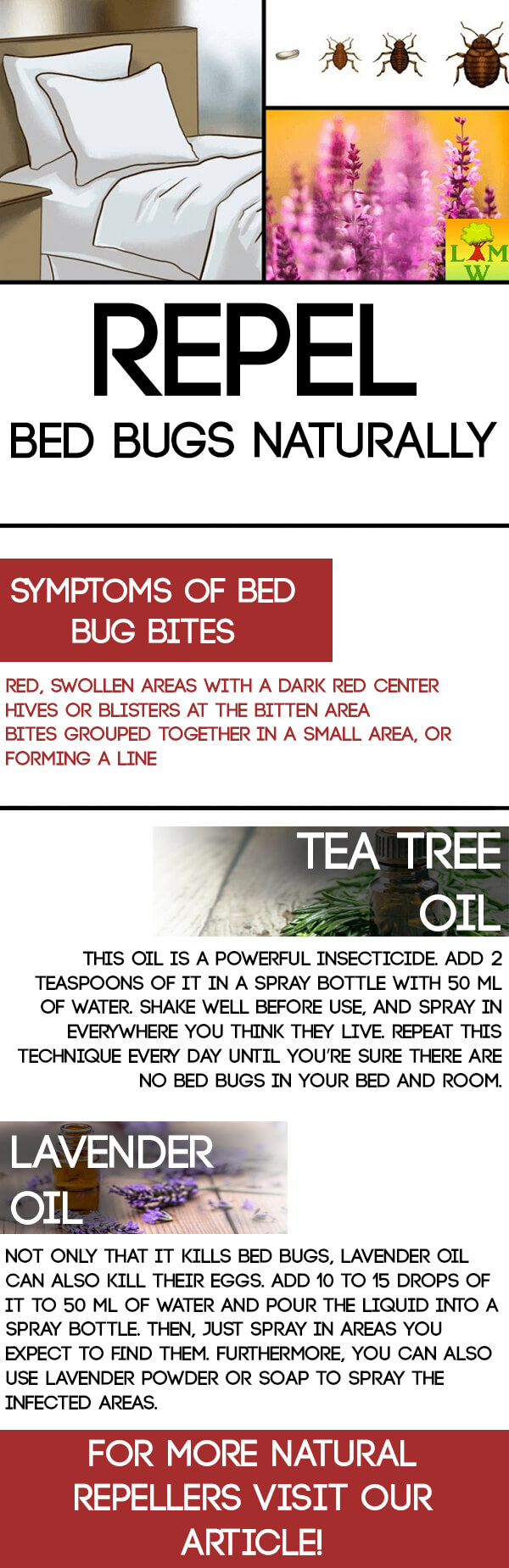 Repel Bed Bugs Naturally (With images) Bed bugs, Bed bug