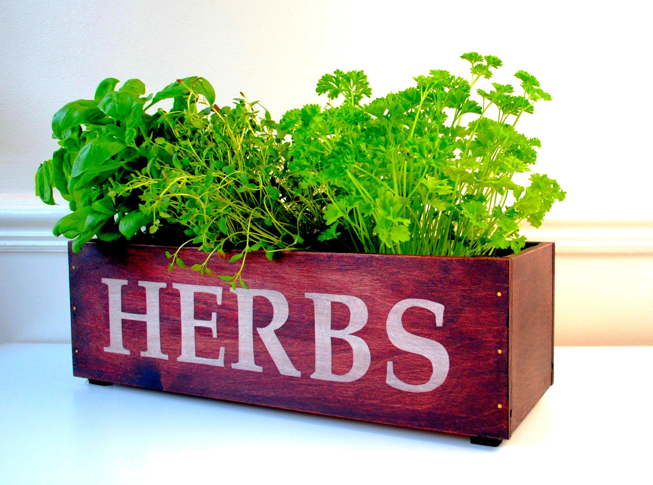 hydroponic herb garden diy hydroponic herb garden diy