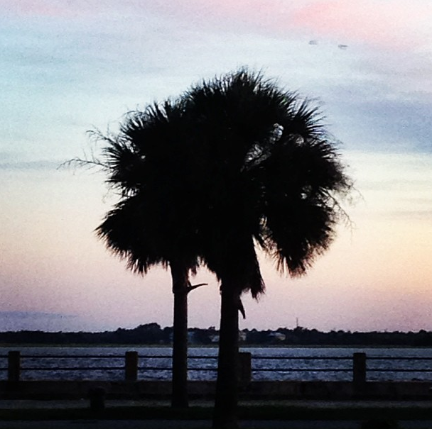 Silhouette of a Palmetto tree along the Battery at sunset