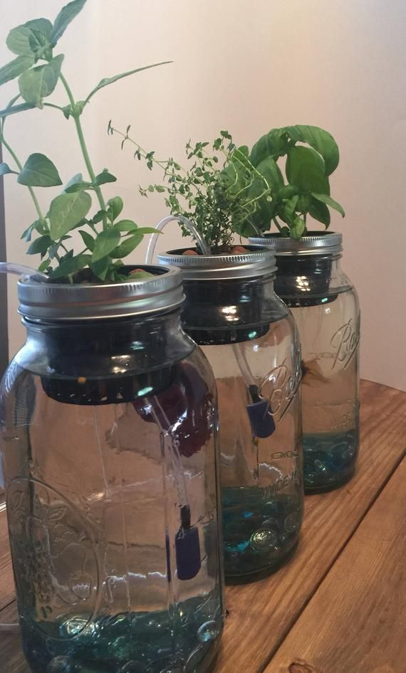Build your own indoor herb garden with this mason jar ...
