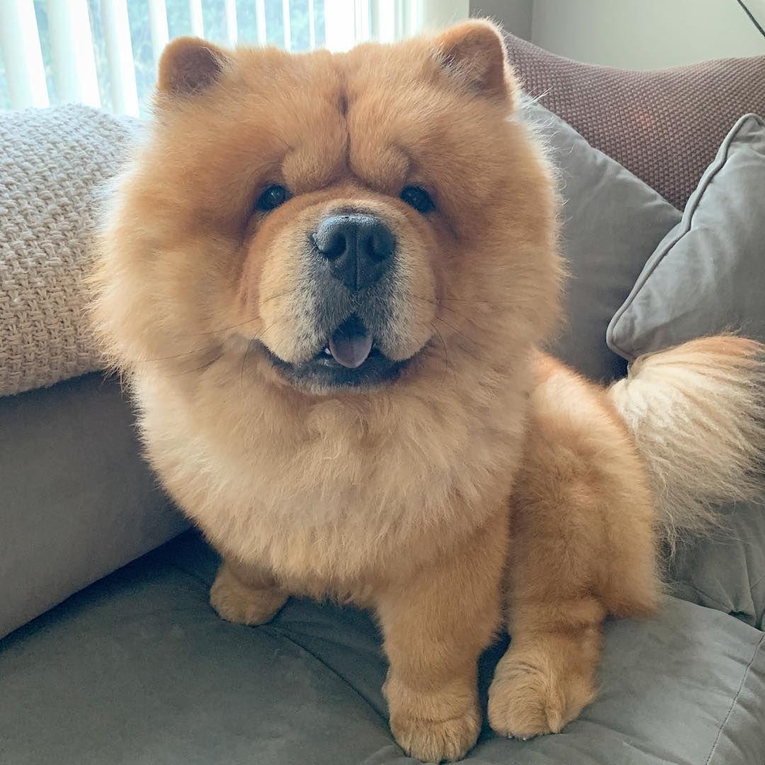 Pin Van Michiel De Ruyter Op Poezelige Hond Honden