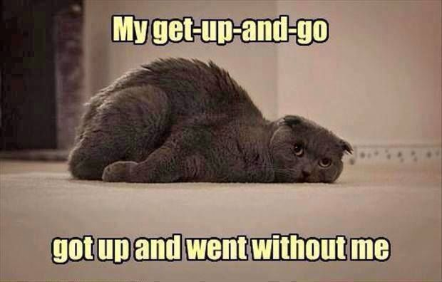 My Get Up And Go Funny Quotes Quote Tired Funny Quote Funny Quotes Humor Tired Funny Funny Animal Memes Funny Animals