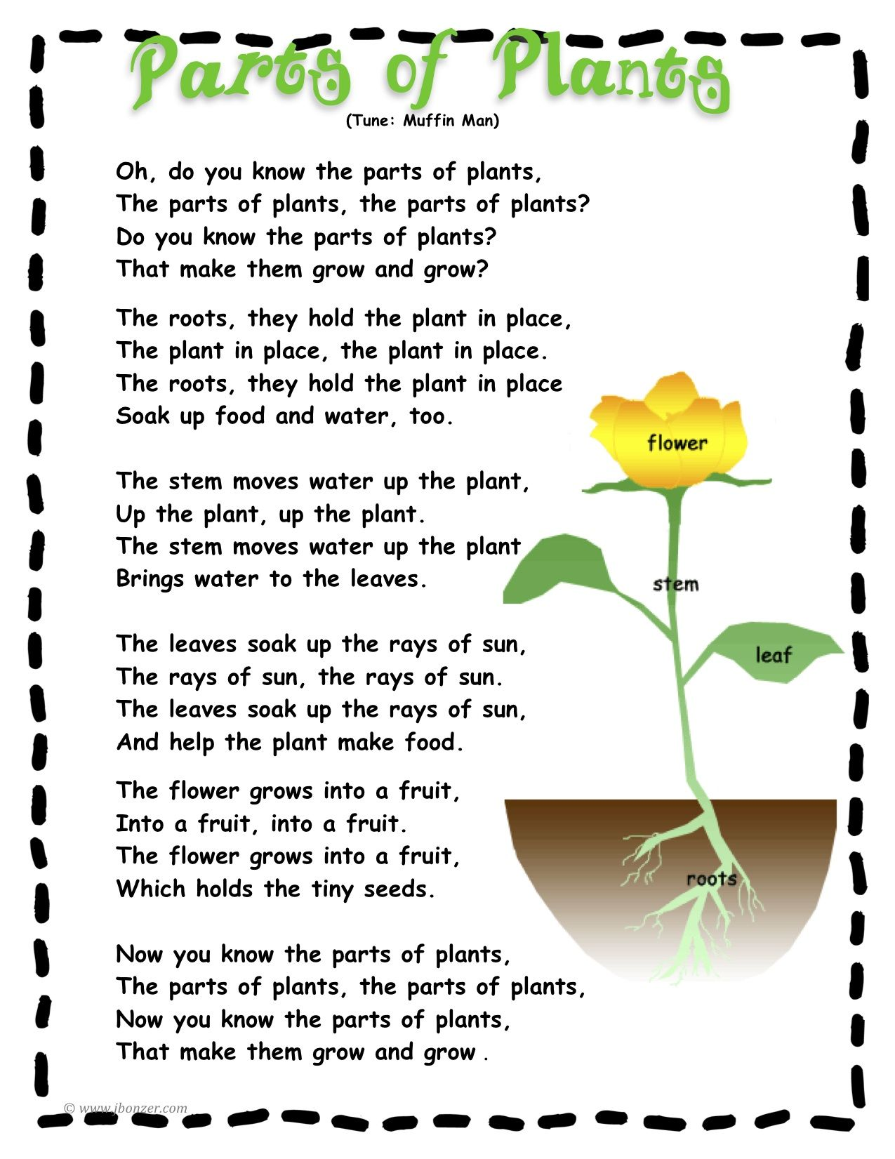 worksheet Parts Of A Flower Worksheet For Preschool cheesy parts of a plant song ib unit pinterest plant