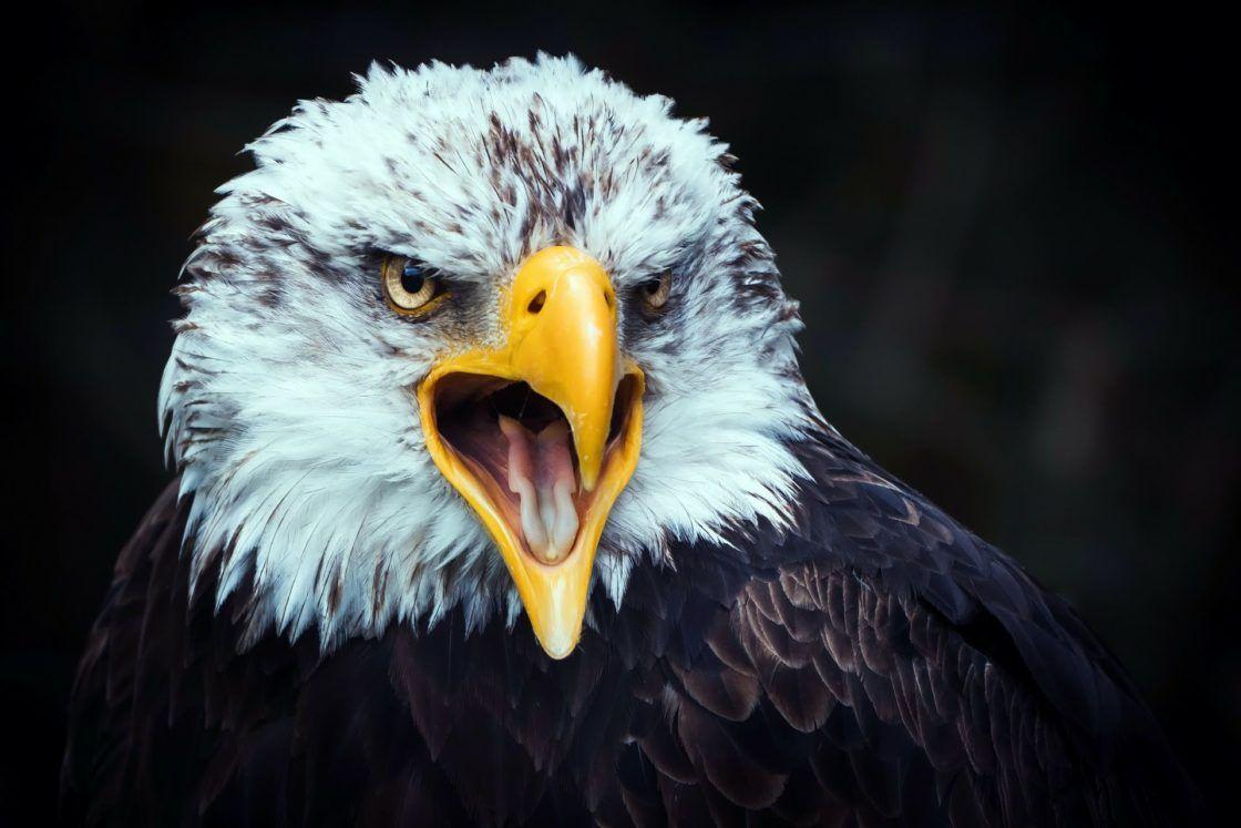 6 Beaux Aigles 6 Beautiful Eagles Voyage Onirique En 2020 Aigle Fond D Ecran Aigle Animales