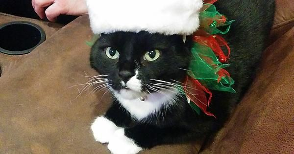 Dear Santa Paws It's me again. I wanted you to send a meteor to the earth for Christmas last year. This year I am asking for two meteors. http://ift.tt/2gvdRfa