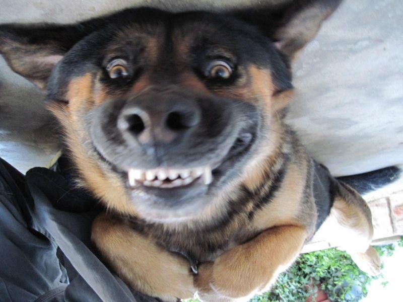 Happy Stuff Very Happy Dog The Joke Box Funny Animal Faces