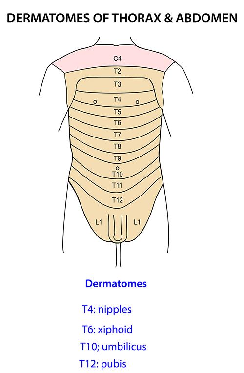 Instant Anatomy Abdomen Surface Dermatomes Body Pinterest