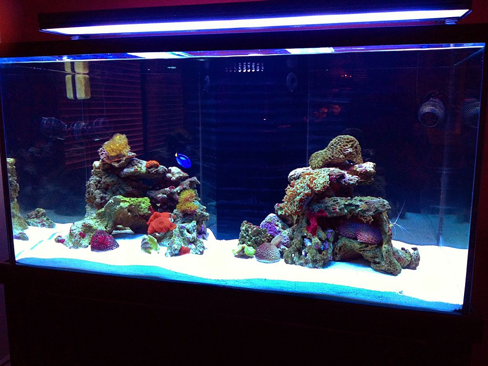 120g tall Aquascaping Ideas | Reef tank, Aquascape, Amazing